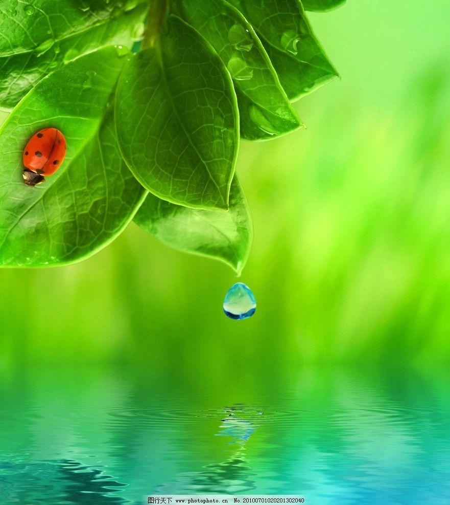高清绿叶子背景图片
