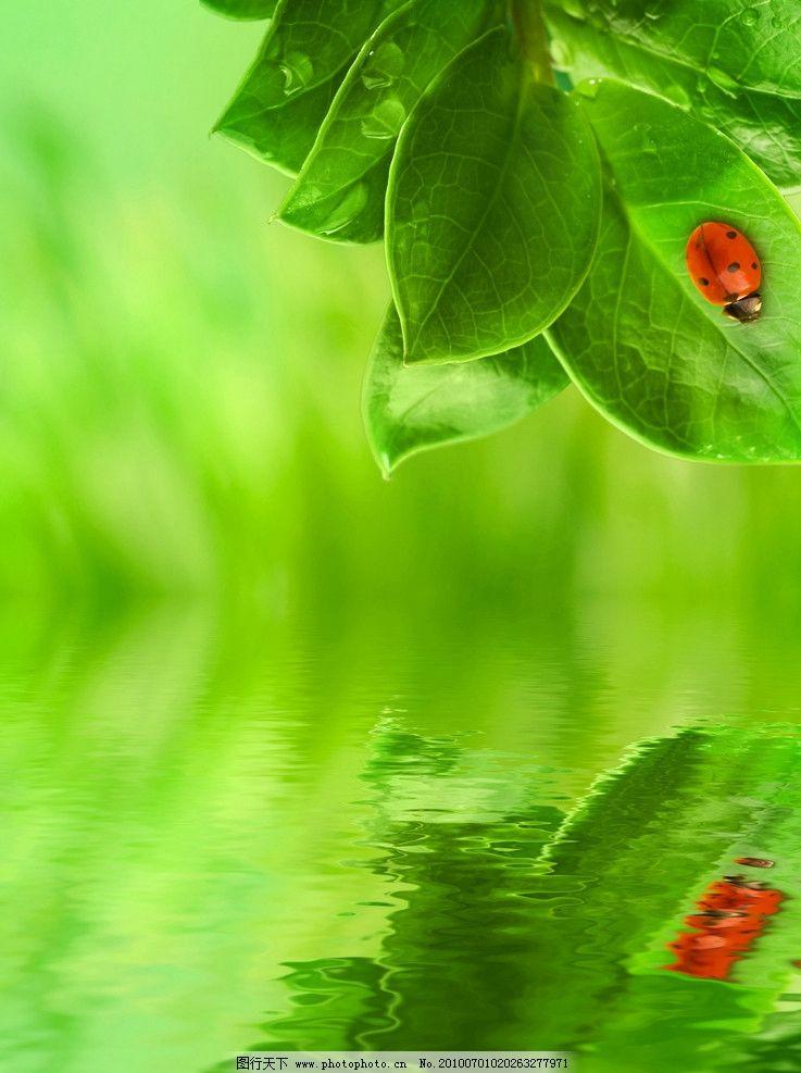 底紋邊框 背景底紋  高清綠葉子背景圖片 綠葉 綠色 樹葉 葉子 水珠