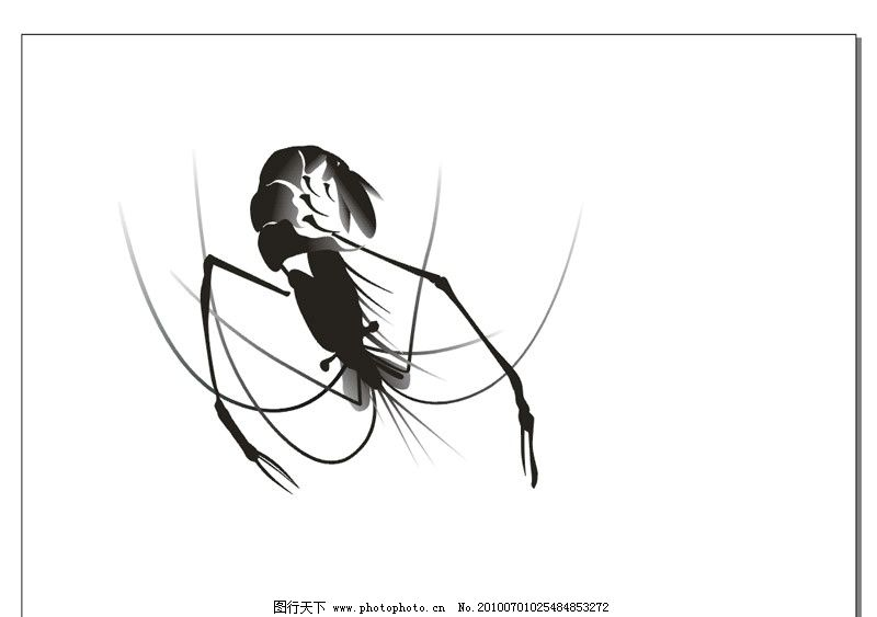 手绘矢量水墨虾图片