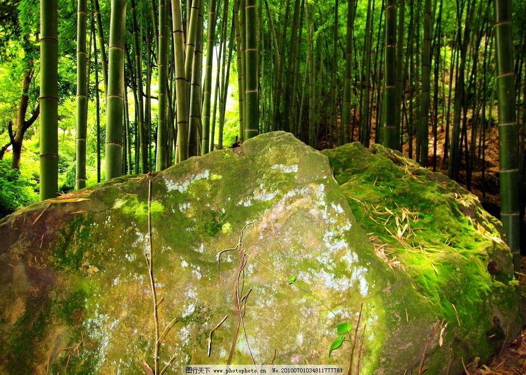 石头 竹子图片_自然风景_自然景观_图行天下图库