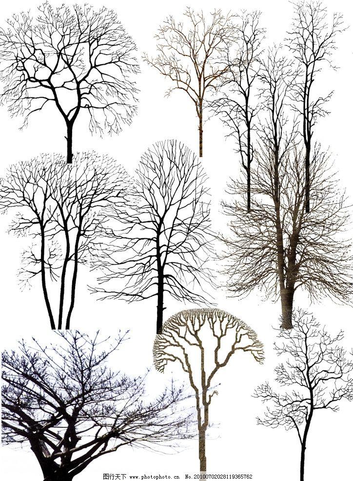 枯树 素材 后期 贴图 花草树木 剪影 冬天 源文件