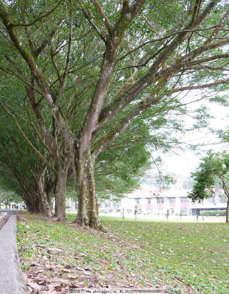 校园树木图片