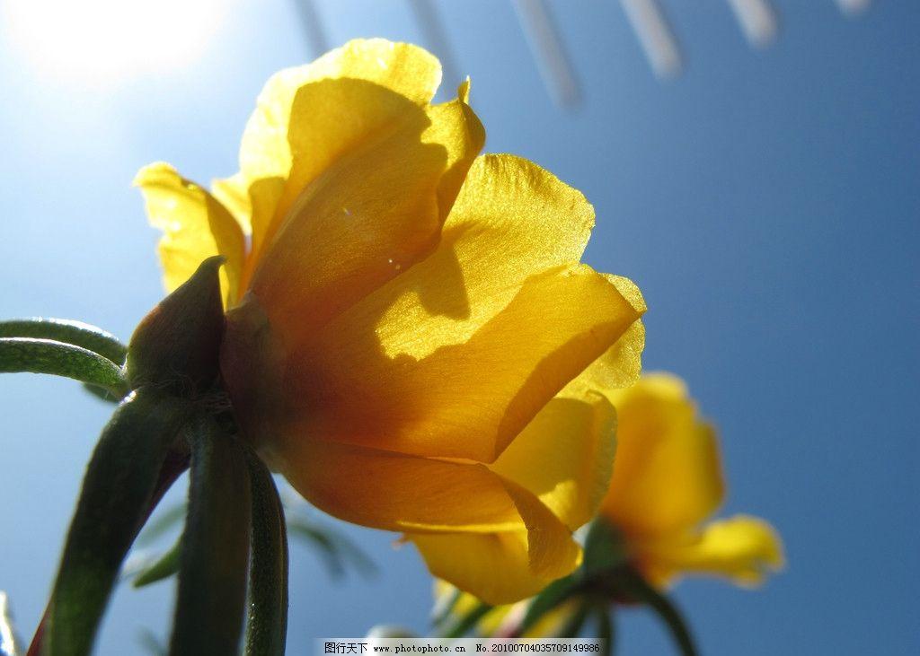 阳光沐浴下的花朵图片