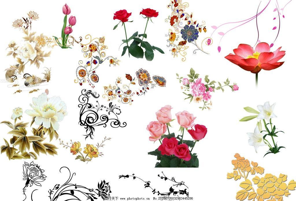 花卉 花纹 背景 月季 牡丹 荷花 郁金香 边框花纹 黑白花纹 背景素材