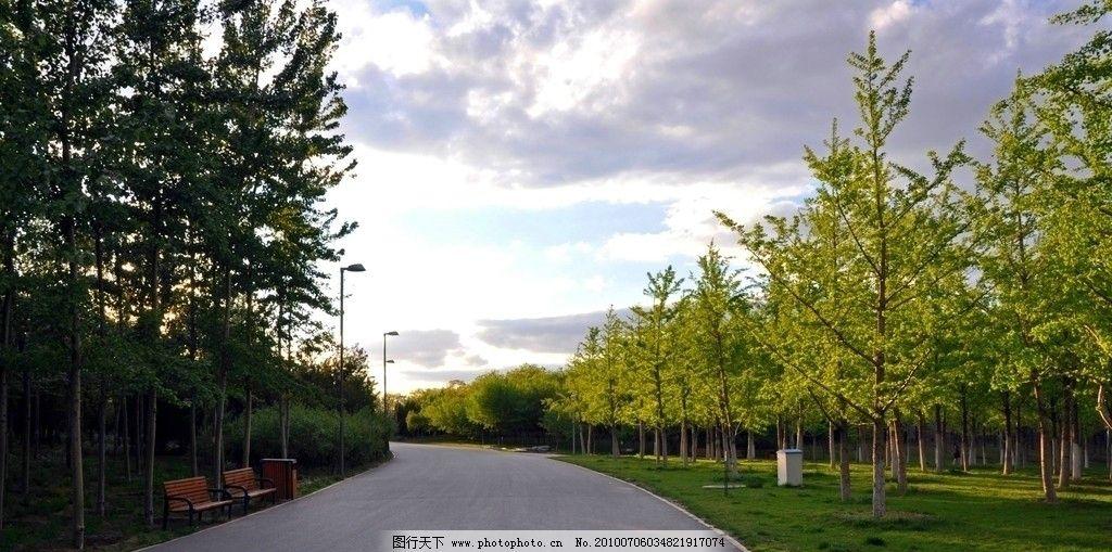风景 风景线 大树 公路 路灯 树林 蓝天白云 椅子 垃圾筒 摄影
