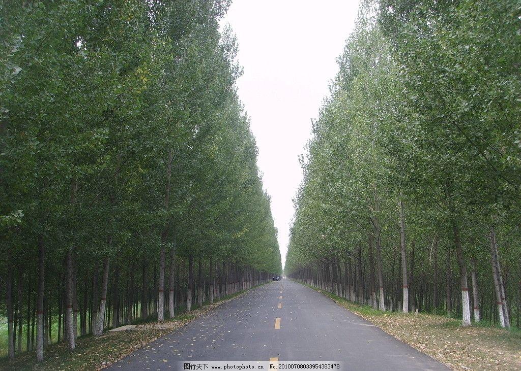 小路 林间小道 景区道路