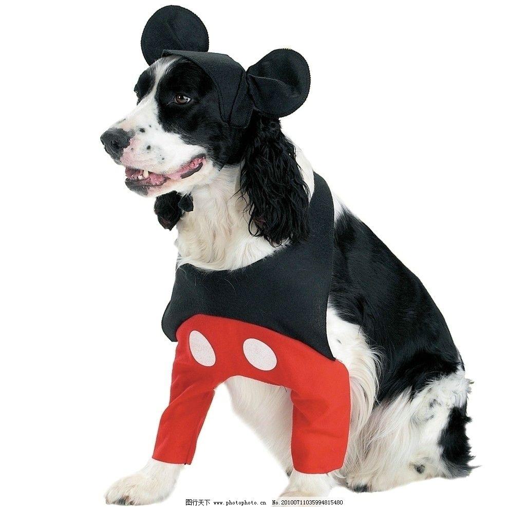 狗狗 猫狗 动物 宠物 哈巴狗 看门狗 衣服 可爱动物 家禽家畜 生物