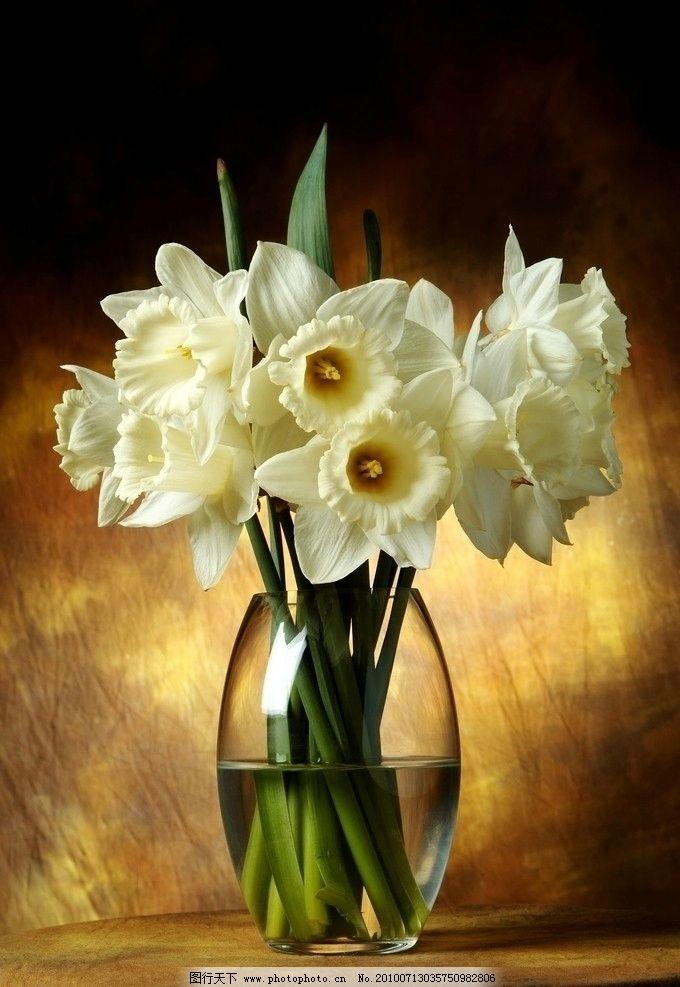 白色水仙 白色 水仙 花瓶 鲜花 花瓣 水 近物 花草 生物世界 摄影 300