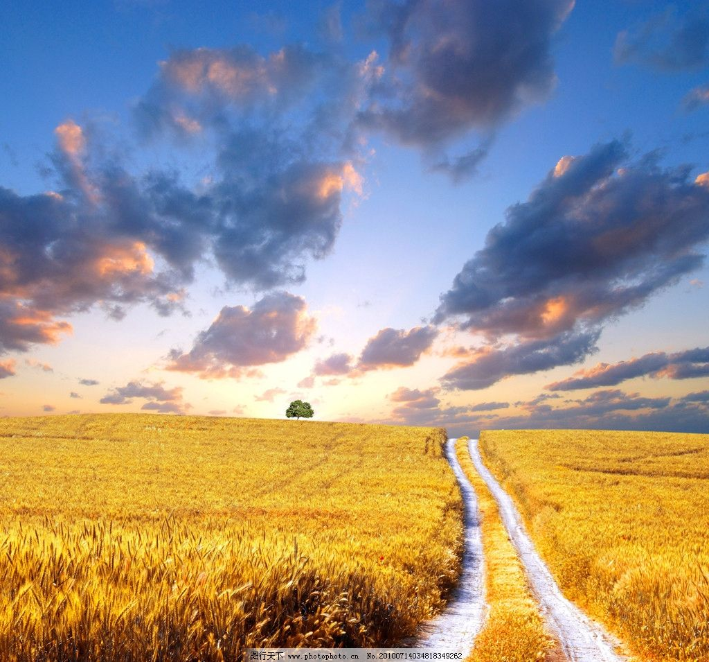 阳光下的麦田高清图片_自然风景_自然景观_图行天下