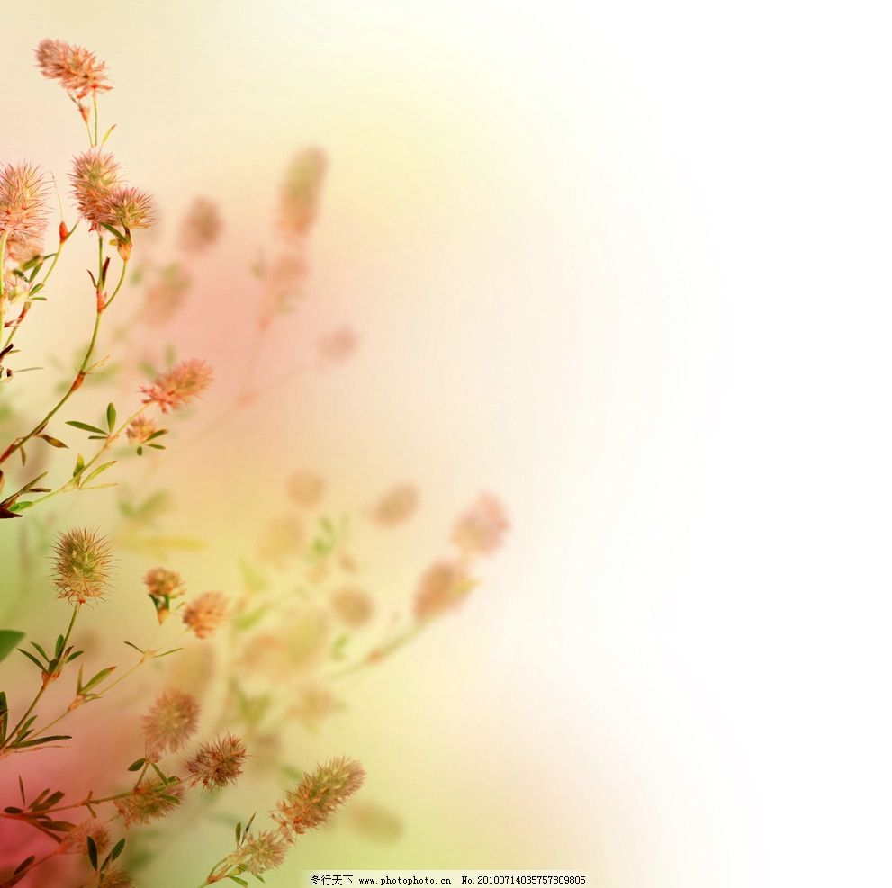 鲜花 花朵 野花 绿叶 枝叶 背景 素材 花草 生物世界 摄影 300dpi jpg图片