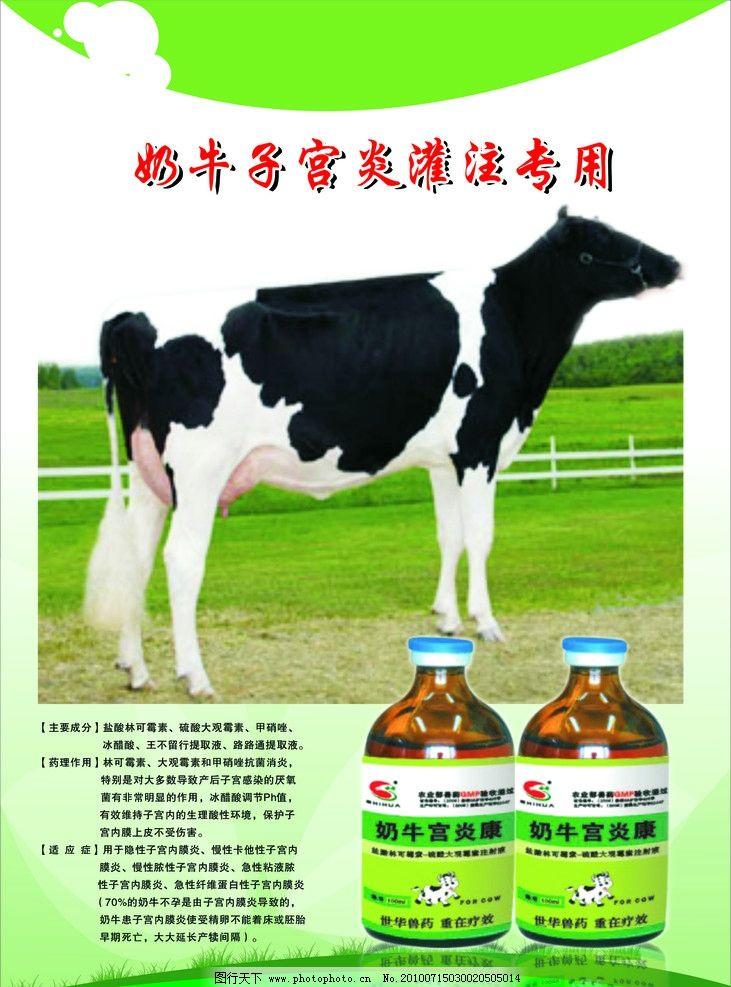 奶牛子宫炎灌注专用 奶牛 奶牛药物 绿地 花牛 海报设计 广告设计