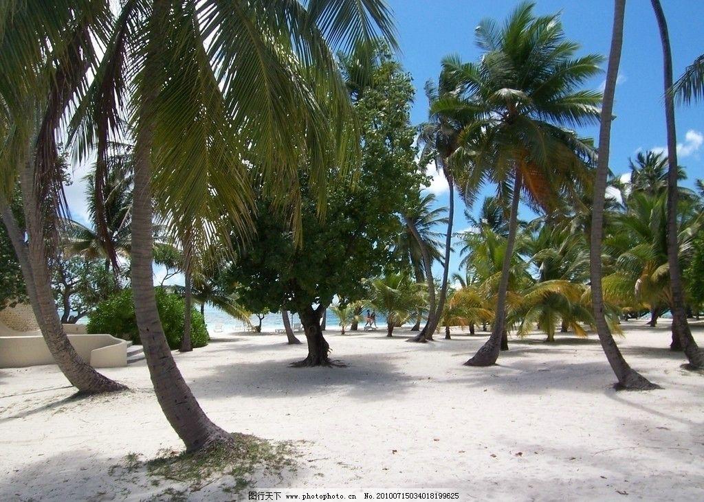 椰林沙滩 马尔代夫 海岛 海滩 椰树 椰林 沙滩 建筑 海岸 游人 海风