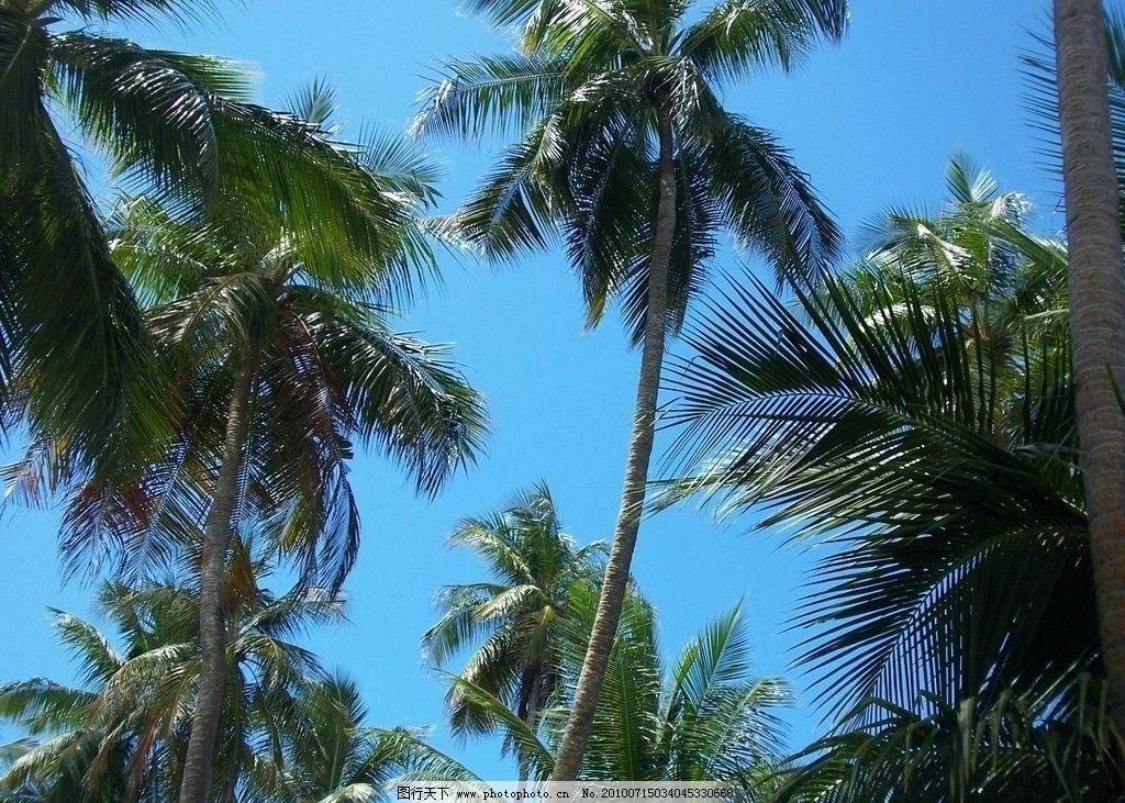 椰树林 马尔代夫 海岛 海滩 椰树 椰林 沙滩 建筑 海岸 游人 海风