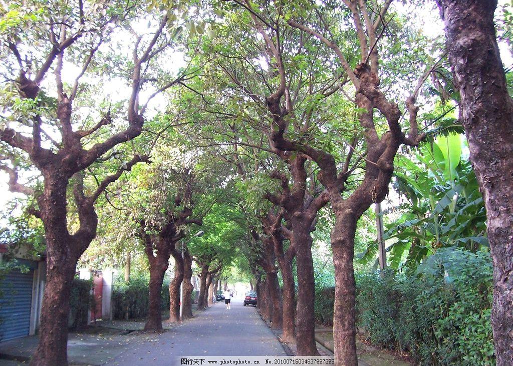林荫道 树木 小路 道路 自然风景 自然景观 摄影