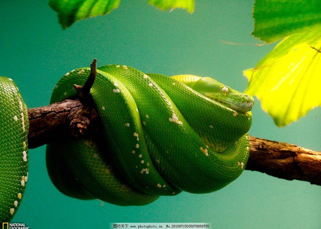 缠在树上的蛇图片