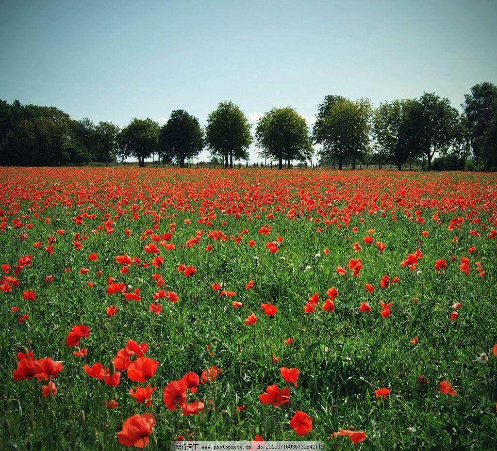 鲜花 风光摄影图片 红花 花朵 草地 树木 花丛 美丽风光 美丽风景