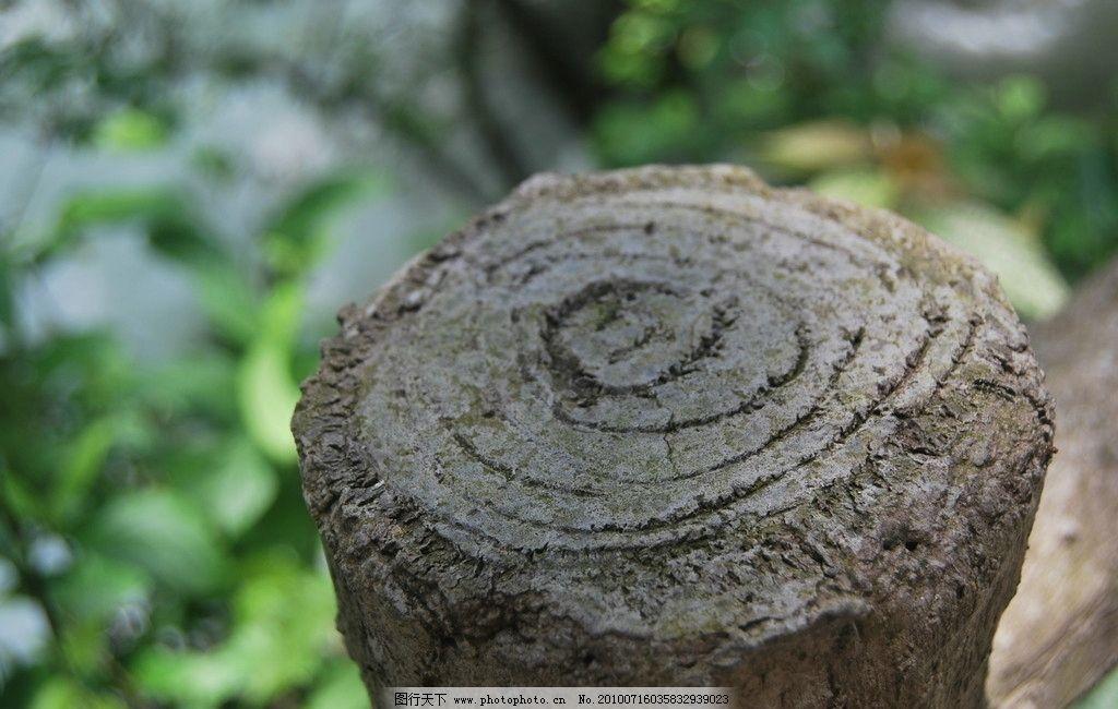 木头 树木 枯树 年轮 树木树叶 生物世界 摄影 300dpi jpg