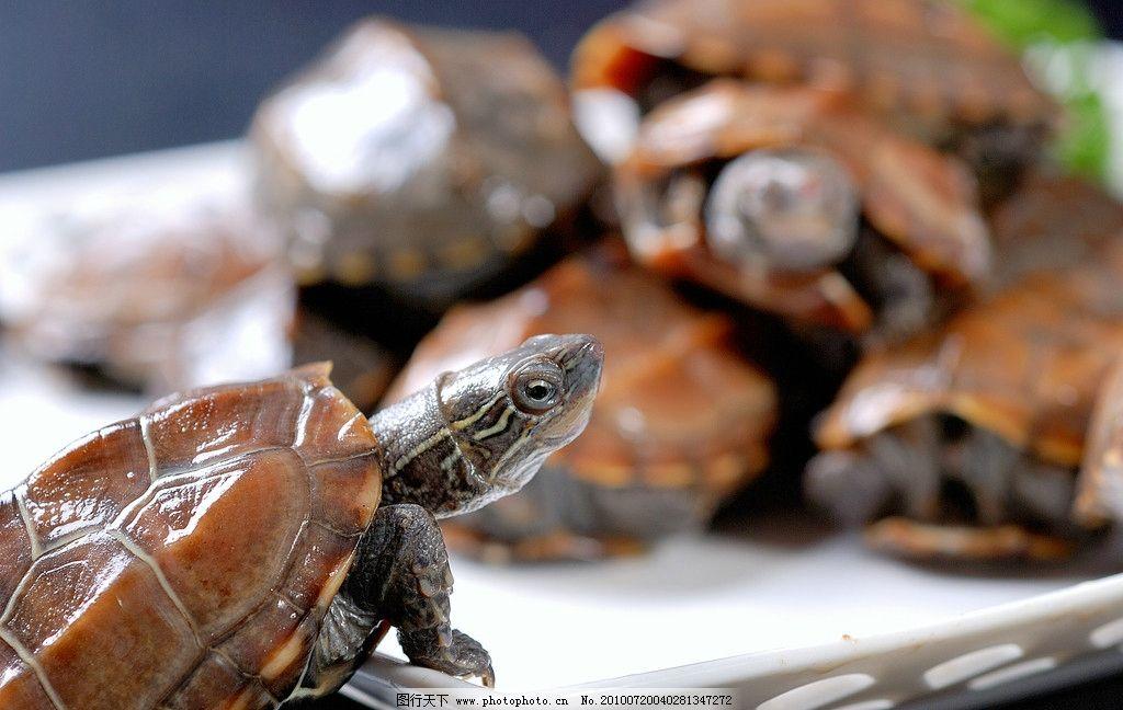 乌龟 甲鱼 甲鱼火锅 鄂菜美食 水产品 传统美食 餐饮美食 摄影 300dpi图片