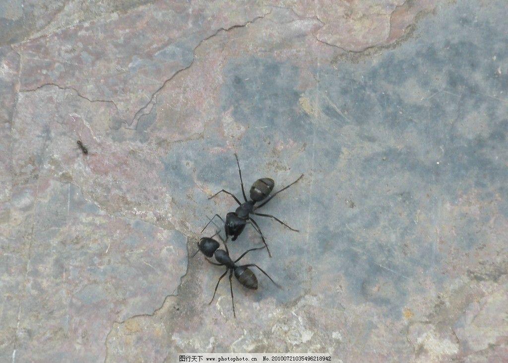 蚂蚁举木头石头图片