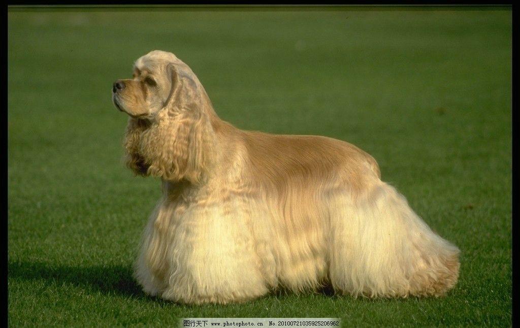 宠物狗 长毛宠物狗 可爱宠物狗 家禽家畜 生物世界 摄影 jpg