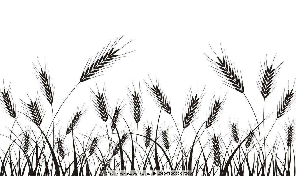 麦穗 小麦 线条 黑白矢量图 cdr8 花纹花边 底纹边框 矢量 cdr