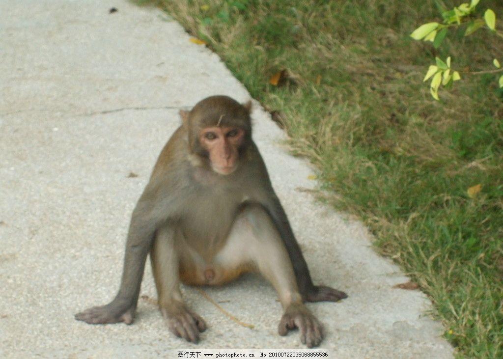猴子 小猴子 小猴 野生动物 生物世界 摄影 72dpi jpg
