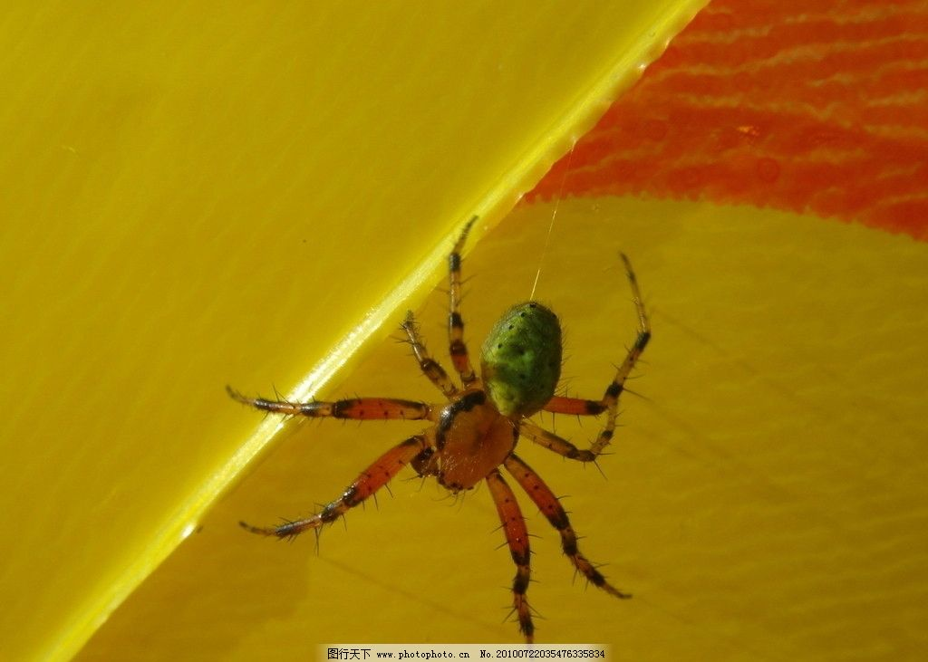 蜘蛛 树叶 昆虫 生物世界 摄影 72dpi jpg