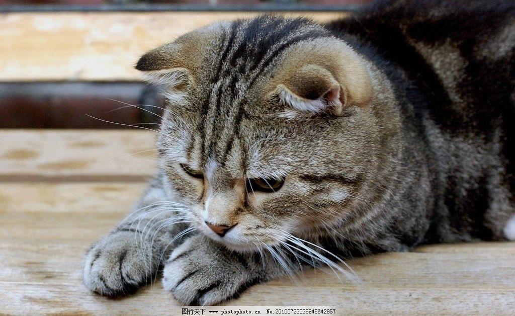 猫咪仔 猫咪 宠物 小猫 可爱 静态 灰色 家禽家畜 生物世界 摄影 300