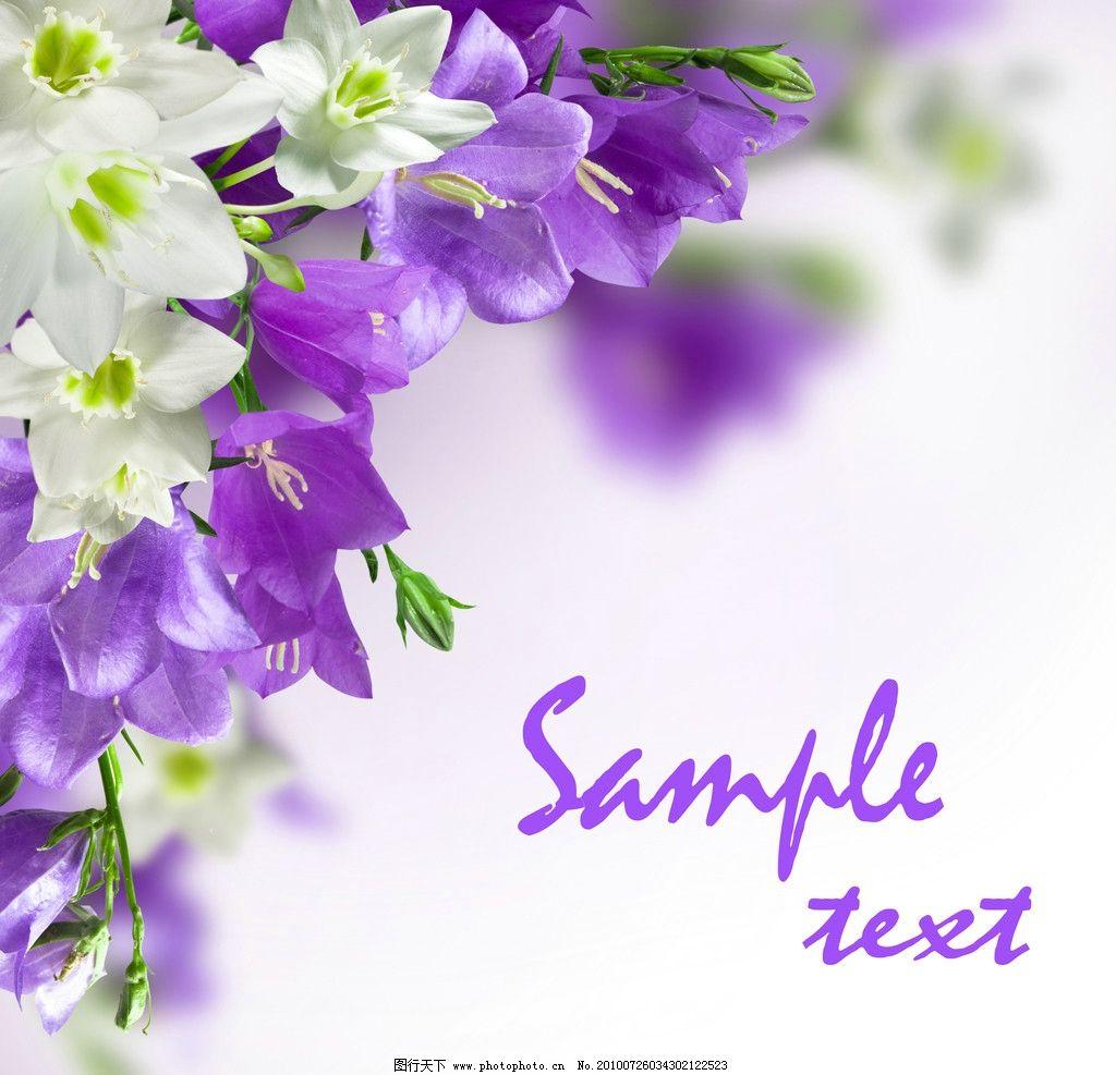 淡雅清新花朵高清图片