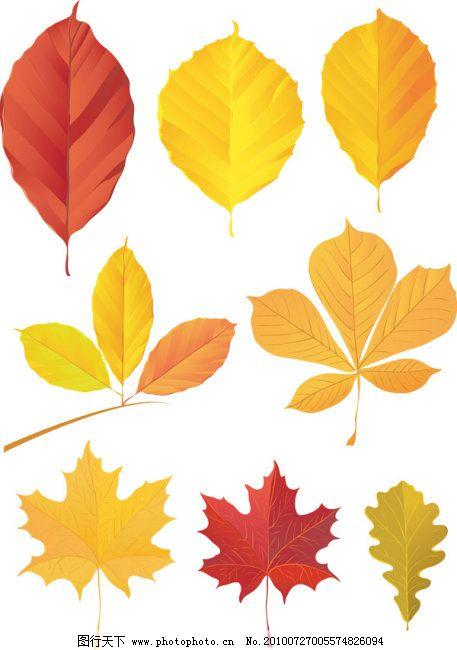 多款秋天树叶矢量图
