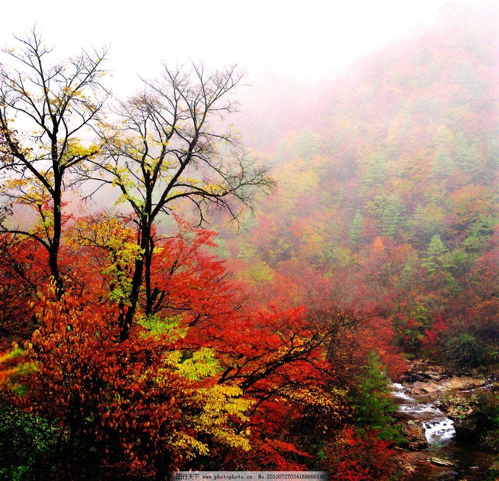 大老岭秋色 大老岭 秋色 风景 风景图 秋 树叶 自然风景 旅游摄影