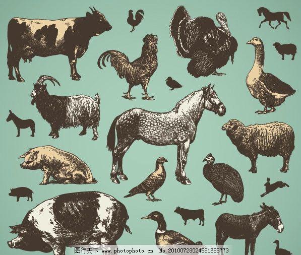 动物牛速写临摹图