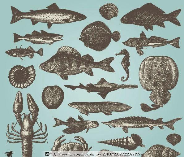 手绘素描海洋动物矢量素材图片