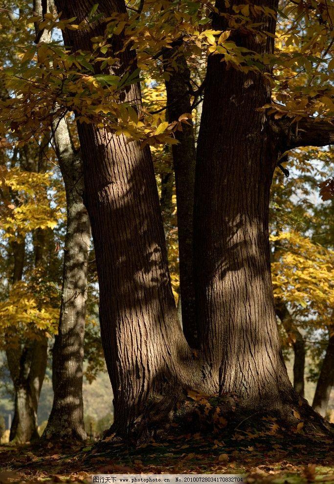 树 古树 树干 大树 树根 高清树木图片素材 摄影图库 自然风景