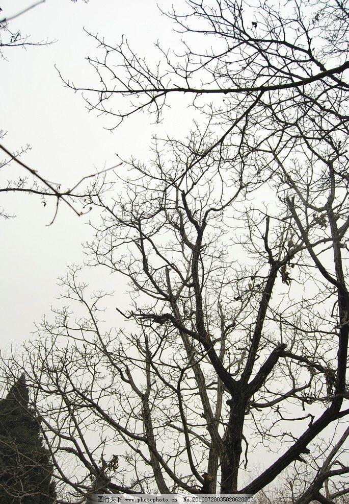 树枝树冠图片