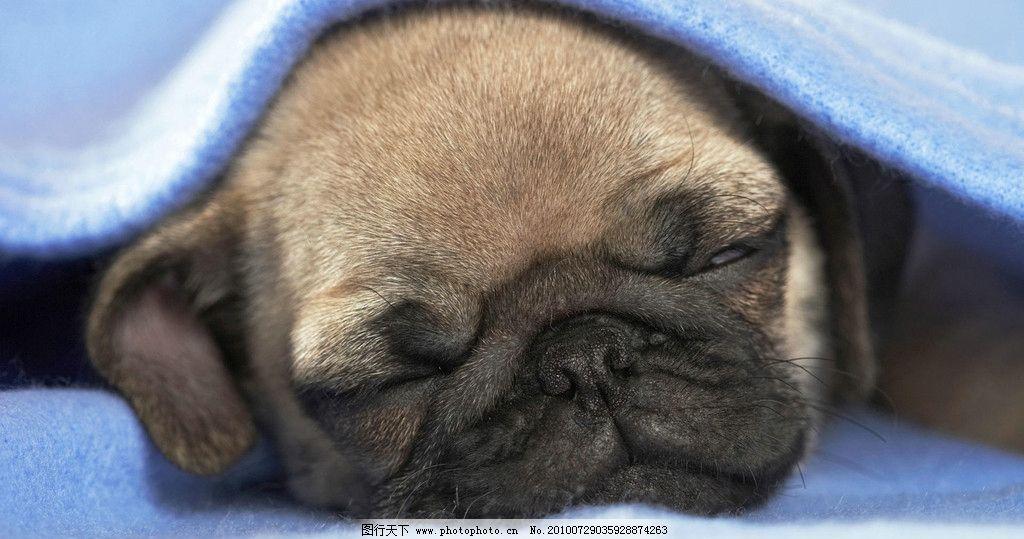 狗狗图片,小狗 可爱的狗狗 小动物 摄影-图行天下图库