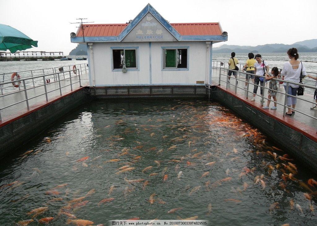 千岛湖鱼乐桥图片