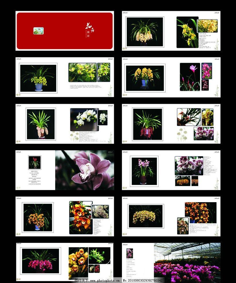 攝影 版式 版式設計 排版 版面 蘭花 吊蘭 黃花 白花 紅花 盆景 植物