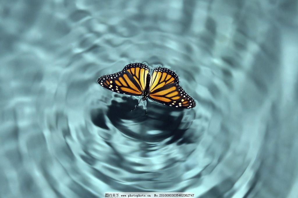 蝴蝶 水池 水 昆虫 可爱动物 家禽家畜 生物世界 摄影 72dpi jpg