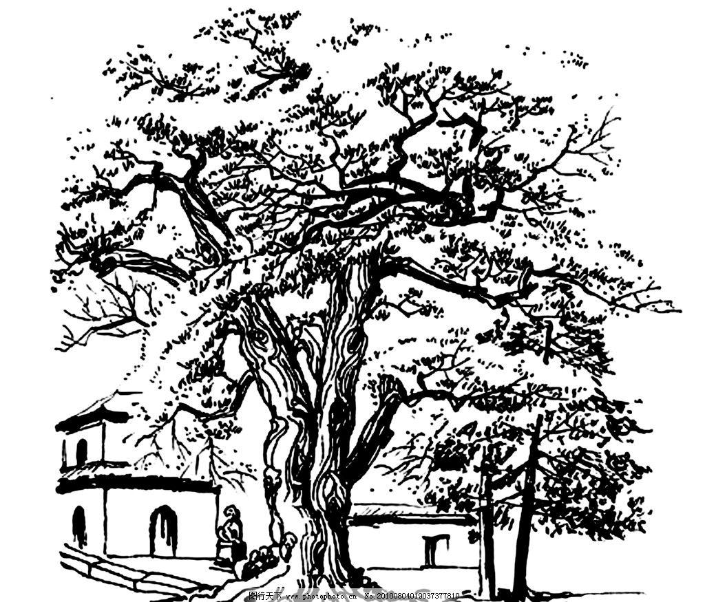 速写 大树图片图片