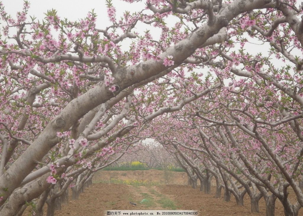 桃园 自然风景 旅游摄影 摄影 180dpi jpg