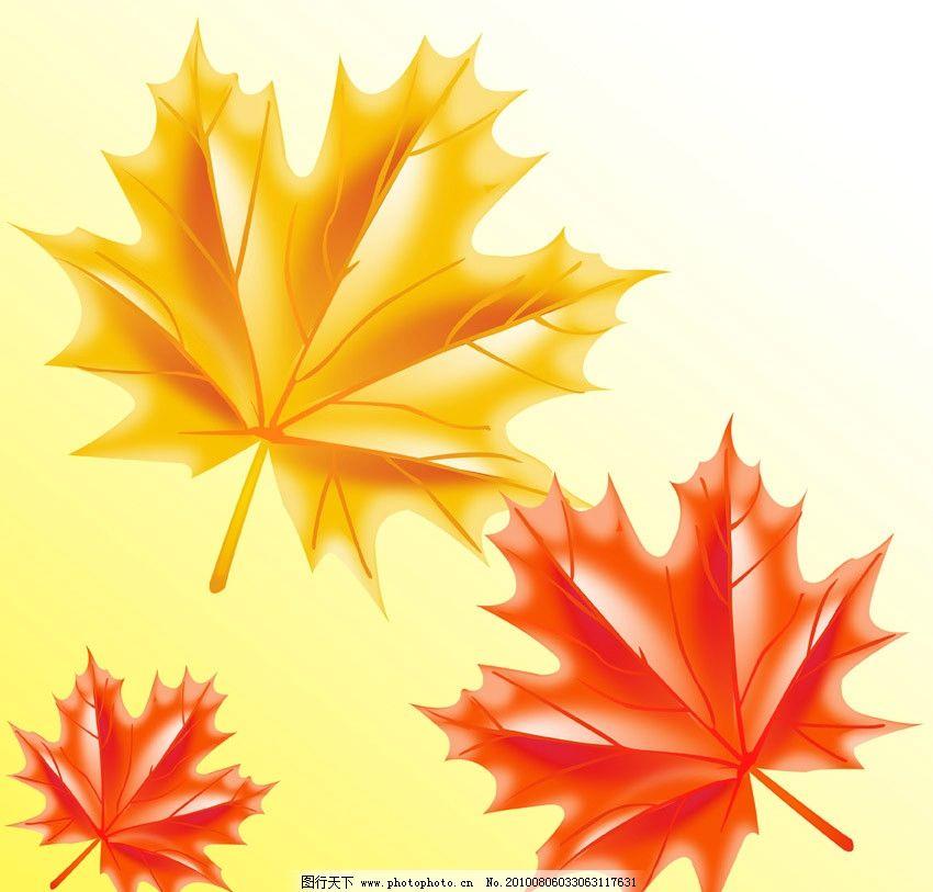 枫叶 树叶 叶子 植物 psd分层素材 源文件 300dpi psd