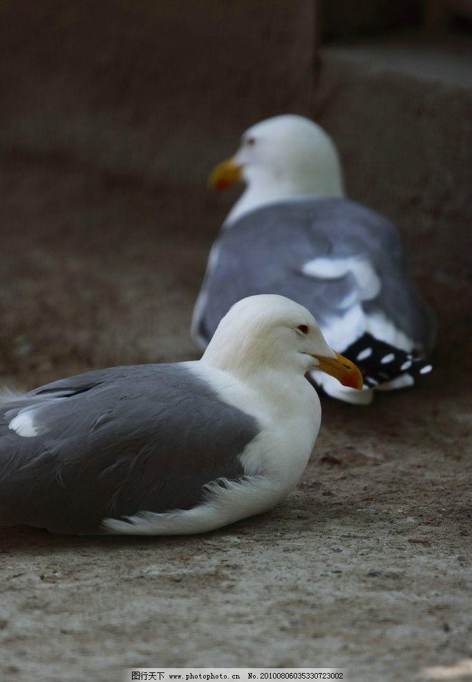 特写 动物 动物园 动物表情 动物世界 生物世界 自然风光 自然风景