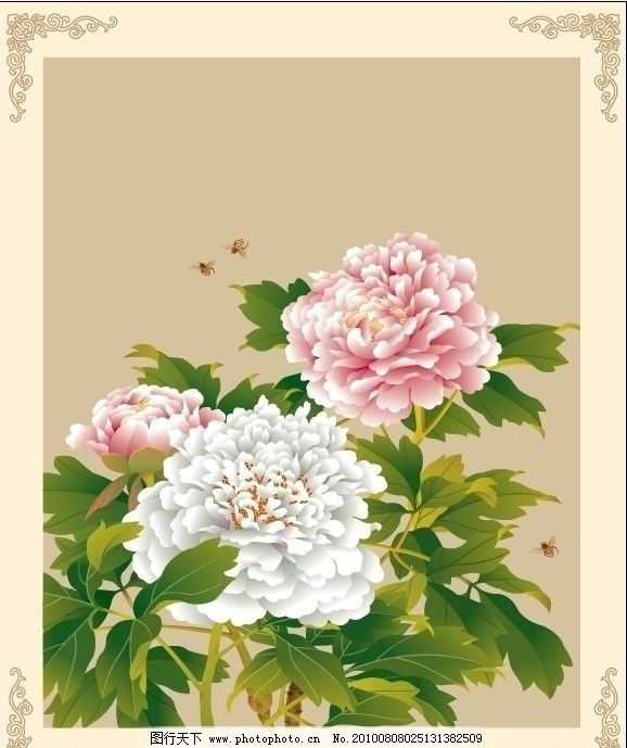 雍容富贵 牡丹 粉牡丹 白牡丹 绿叶 小蜜蜂 花纹 底纹 花边 边框 古典