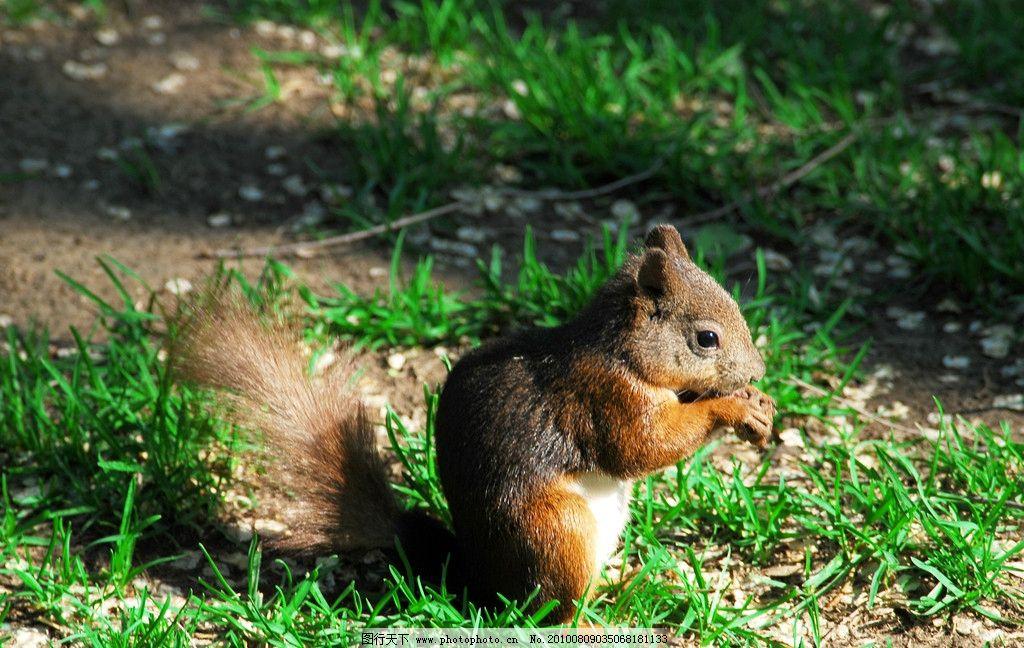 松鼠图片_野生动物_生物世界