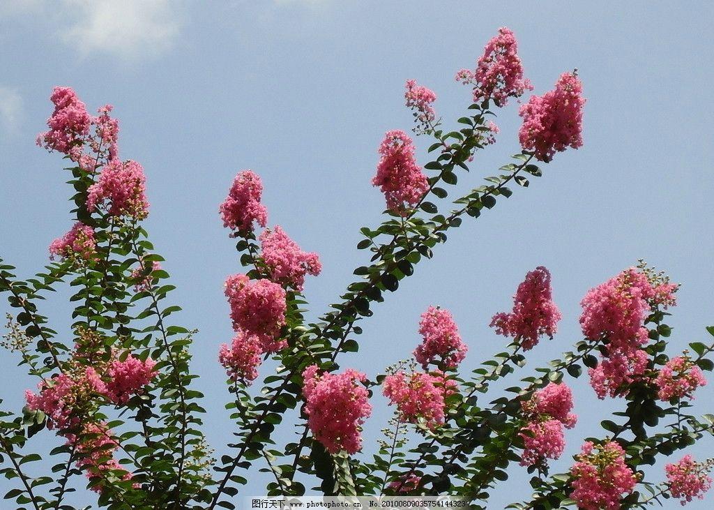 凤尾花 花卉植物风景天空绿色红花花凤尾花