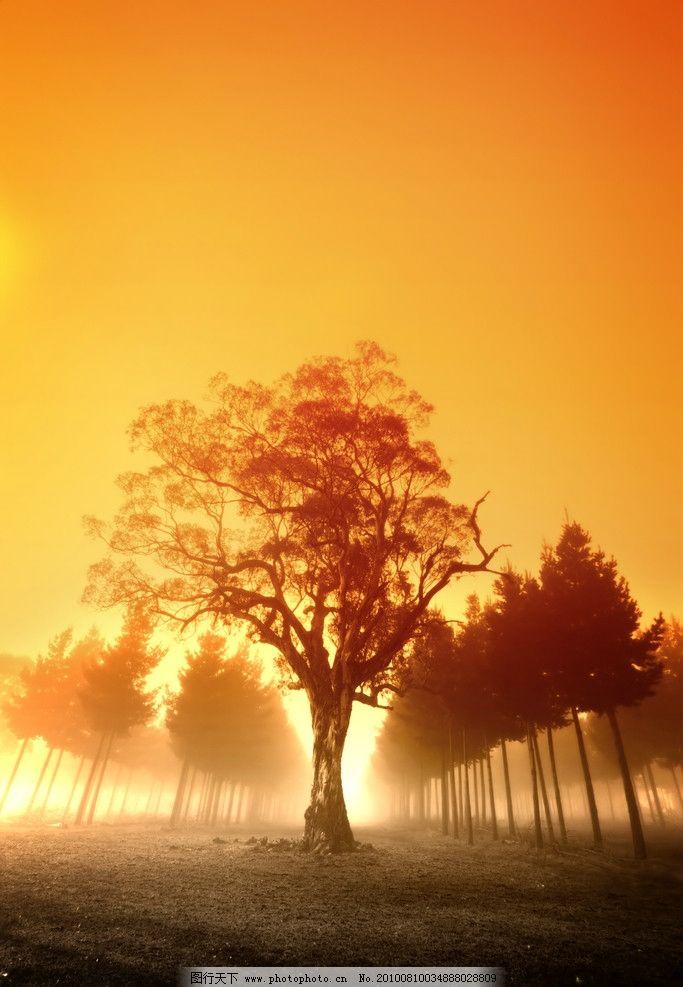 黄昏 景色 大树 树木 道路 树林 秋天 秋季 日落 霞光 摄影 自然风景
