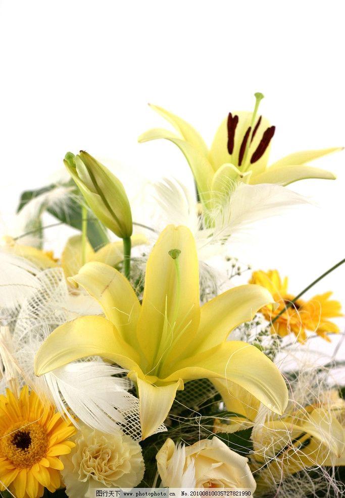 漂亮的花朵高清图片