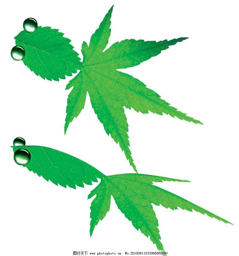 树叶 金鱼 叶子 植物 动物 绿色 分层 源文件