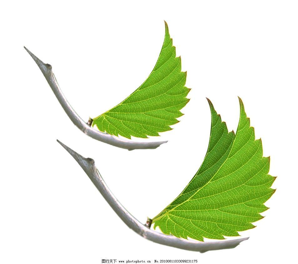 树叶 鸟 天鹅 叶子 树枝 飞 植物 动物 绿色 分层 源文件